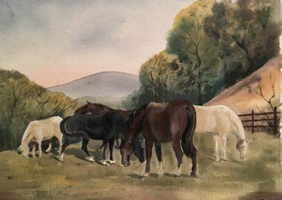 Pasture Grazers