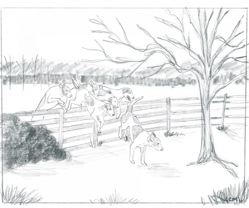 hounds-over-fence-pencil