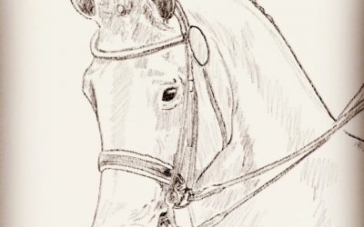 Horse and Dog Portraits